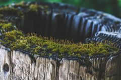 Rooftop Moss on a Log royalty free stock image