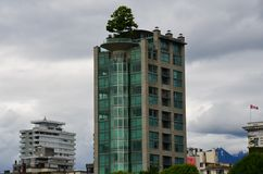 High Rise Tree, Vancouver, British Columbia, Canada Royalty Free Stock Photo