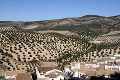 Rooftops and olive grove, Montefrio, Spain. Royalty Free Stock Photo
