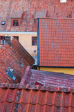 Rooftops of the Swedish town Visby Stock Photos