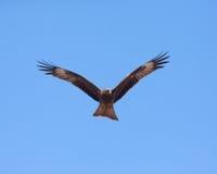 Roofzuchtige vogel royalty-vrije stock foto's