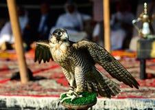 Roofzuchtige vogel - bruine Valk stock foto's