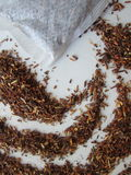 Rooibos Royalty-vrije Stock Afbeelding