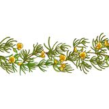 Rooibos branch vector pattern vector illustration