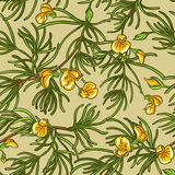 Rooibos seamless pattern stock illustration