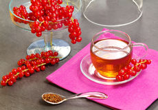 Rooibos tea with redcurrant Royalty Free Stock Photos