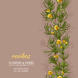 Rooibos vector background royalty free illustration