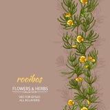 Rooibos-Vektorhintergrund lizenzfreie abbildung