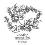 Rooibos vektoruppsättning royaltyfri illustrationer
