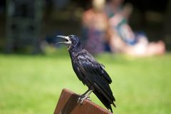 rook Stock Foto's