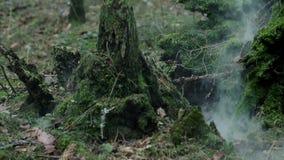 Rook die van onder groen mos onder rotte stompen in dicht bos toenemen stock footage