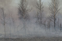 Rook en gebrande bomen vlak na de bosbrand Stock Foto's