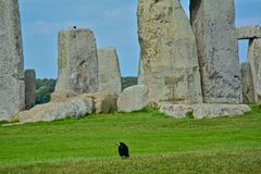 Rook in Front of the Rocks of Stonehenge. On a Cloudy Summer Day royalty free stock photo