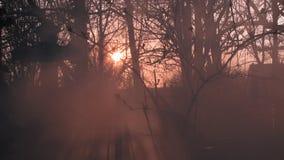 Rook het Branden in een Begraafplaats in Odessa, de Oekraïne stock foto