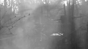 Rook het Branden in een Begraafplaats in Odessa, de Oekraïne stock fotografie