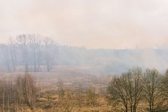 Rook van de brand in de bosrookbossen Het begin van een bosbrand Droog gras stock foto's