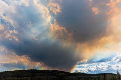 Rook van wildfire Royalty-vrije Stock Foto's