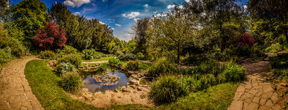 Rookery panorama Stock Images