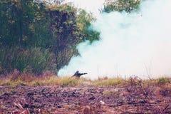 Rookgebied en brandweerman brandende wildfire royalty-vrije stock foto's