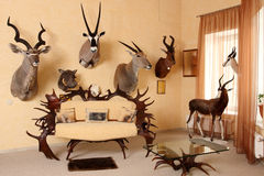 Room. For trophies of the hunter Royalty Free Stock Photo