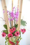 Room decoration with bamboo cane, phalaenopsis, red blossoms and royalty free stock images