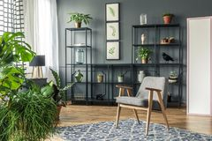 Room full of plants. Grey chair and black shelves in a room interior full of plants stock photography