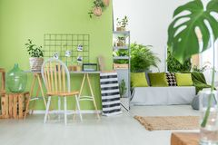 Room with green pot flowers. Green room with many green pot flowers royalty free stock image