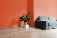 Room interior with bright wooden floor with orange wall, modern. Comfortable sofa and plant on wooden box Royalty Free Stock Photo