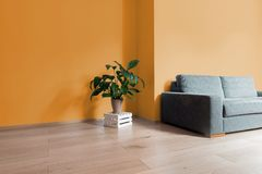 Room interior with bright wooden floor with orange wall, modern. Comfortable sofa and plant on wooden box Stock Image