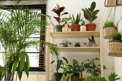 Free Room Interior With Different Home Plants Stock Photo - 148995500