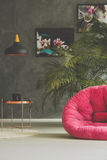 Room with plant decoration. Room with pink plush armchair, plant decoration and pictures of flowers Royalty Free Stock Photos