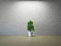 Room with plant Stock Photos