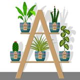 Room plants and flowers in pots on on rack with labels sale, discount 50 percent. Flat style illustration. Chlorophytum, di. Effenbachia, cactus stock illustration
