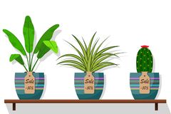 Room plants and flowers in pots on shelf with labels sale, discount 50 percent. Flat style illustration. Chlorophytum, cact. Us stock illustration