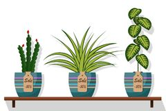 Room plants and flowers in pots on shelf with labels sale, discount 50 percent. Flat style illustration. Chlorophytum, dief. Fenbachia, cactus stock illustration