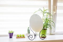 A room window with decoration. A modern room window with decoration, flowers in the pot Royalty Free Stock Photos