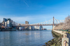 Roosevelt Island during cherry blossom in New York City Stock Photos