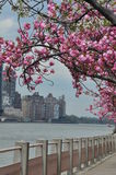 Roosevelt Island em New York City Fotografia de Stock