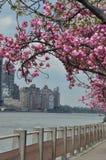 Roosevelt Island i New York City Arkivbild