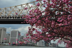 Roosevelt Island i New York City Royaltyfri Foto