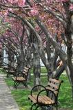 Roosevelt Island i New York City Royaltyfri Fotografi