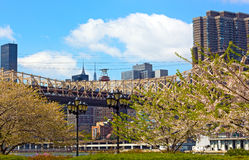 Roosevelt Island Tramway and Queensboro Bridge in blooming season. Royalty Free Stock Image