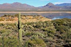 Roosevelt Lake Arizona fotos de stock