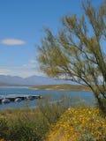 Roosevelt Lake mit dem Grün und Jachthafen lizenzfreie stockfotos
