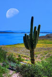 Roosevelt Lake and Moon Stock Images