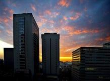 Rooskleurig neer van Shinjuku Royalty-vrije Stock Fotografie