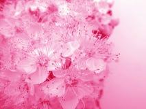 Rooskleurige bloemenkaart Royalty-vrije Stock Foto's