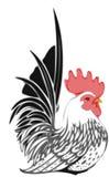 rooster Стоковые Изображения