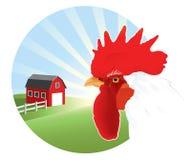 rooster Arkivfoto