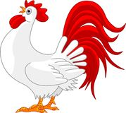 Rooster. Illustration of white cartoon rooster Stock Photo